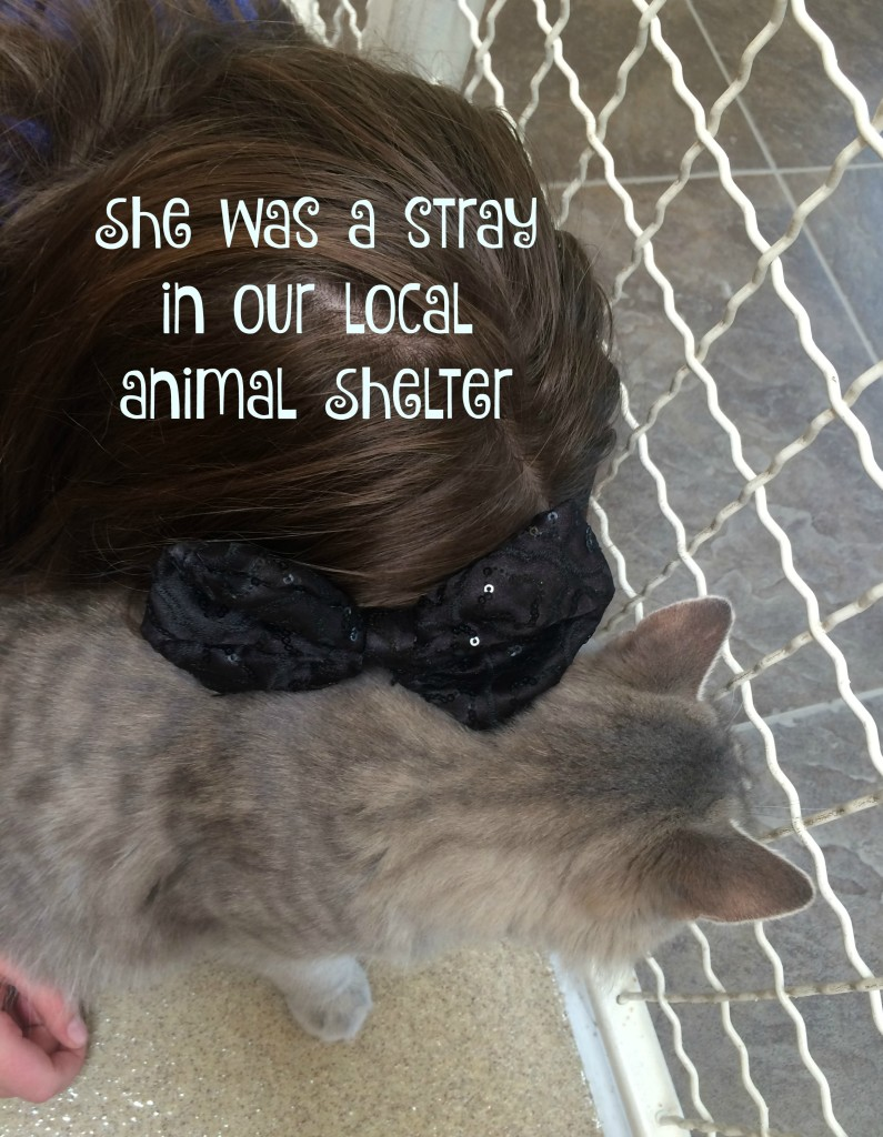 pet-adoption-she-was-a-stray