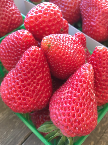 tanaka-farms-strawberry-basket